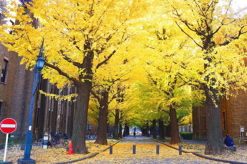 จุดถ่ายรูป-University-of-Tokyo1