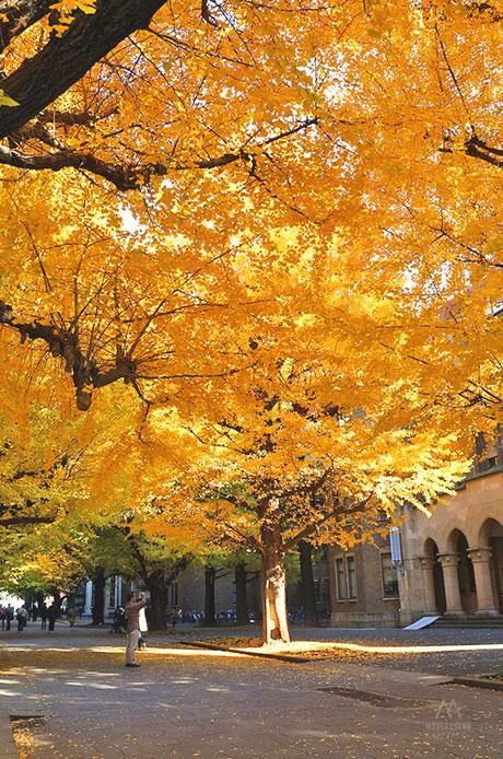 จุดถ่ายรูป-University-of-Tokyo2