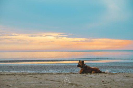 Brassiere-Beach-Resort9