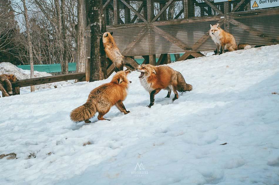 Plan-fox-village-resize13