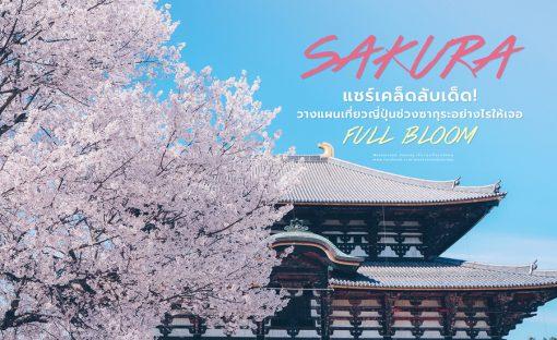 แชร์เคล็ดลับเด็ด! วางแผนเที่ยวญี่ปุ่นช่วงซากุระอย่างไรให้เจอ FULL BLOOM