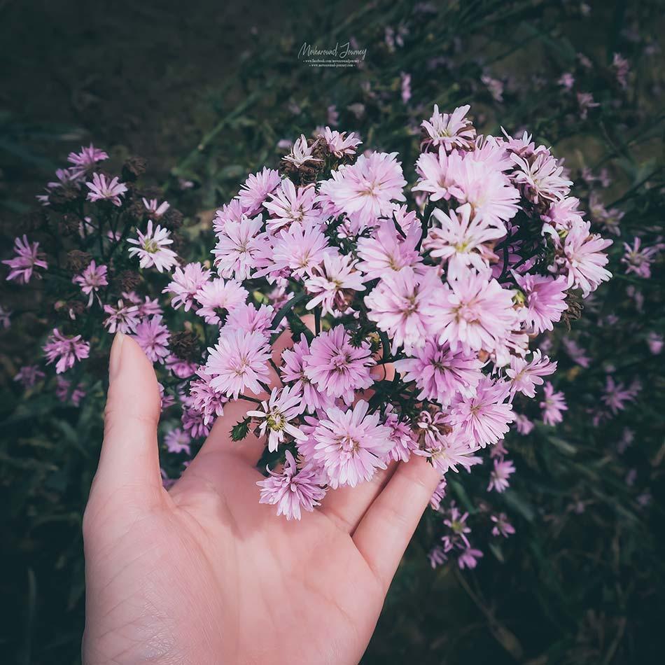 เชียงใหม่ สวนดอกไม้